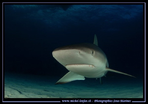 Face to face with a Reef Shark.... :O)... by Michel Lonfat 